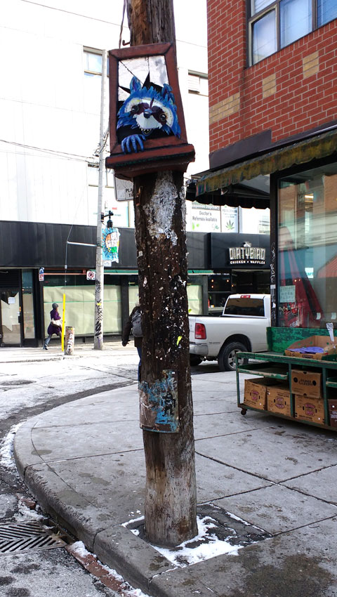 Racoon chilling up a pole in Kensington Market.